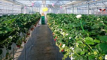 いちごの成長制御を目的とした、温湿度センサを使った圃場全体の制御システム